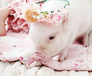 miley cyrus, pig, and cute image