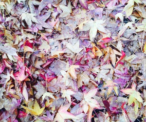 fall, filter, and leaves image
