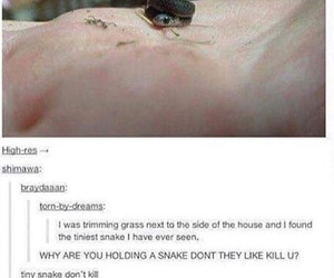 dangerous, funny, and snake image
