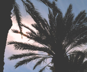 palm, summer, and tumblr image