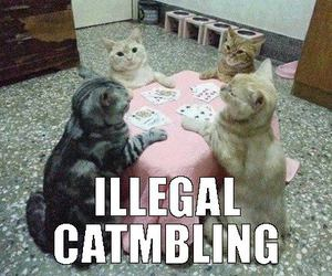 meow, funny cats, and cat poker image