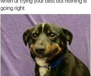 funny, dog, and life image