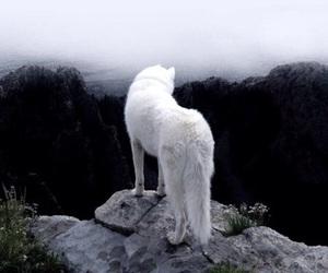 white, wolf, and animals image