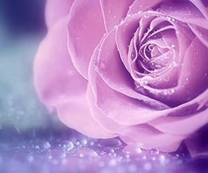 beautiful, flower, and purple image