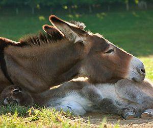 horse and donkey image