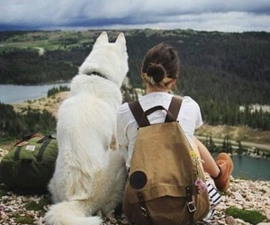 adventures and dog image