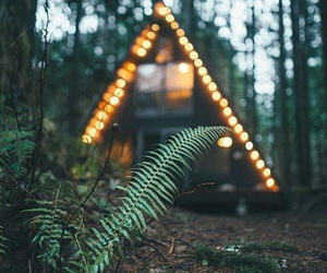 forest, lights, and nature image