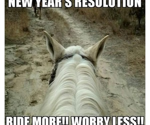 goals, horses, and resolutions image