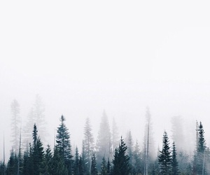 forest, beautiful, and nature image