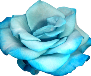 blue, flower, and png image