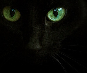 black cat and green eyes image