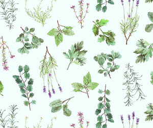 floral, herbs, and wallpaper image