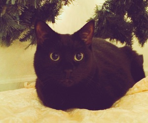 black cat, christmas tree, and cat image
