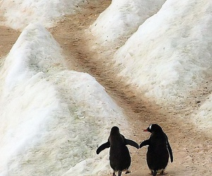 penguin, animal, and couple image