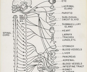 anatomia, medical, and medicine image