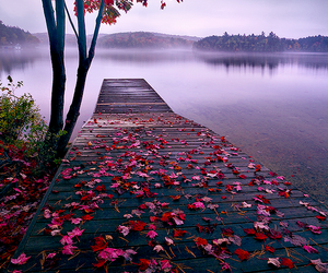 nature, lake, and flowers image