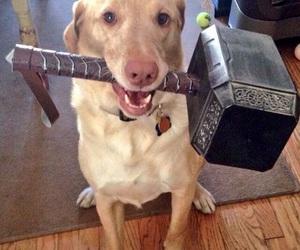 thor, dog, and funny image