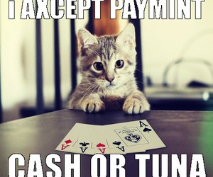 funny cats, cat meme, and poker cat image