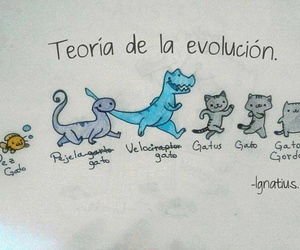 cat, evolution, and lol image