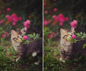 beautiful, crazy, and flowers image