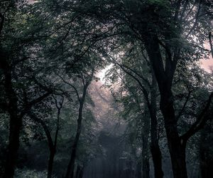 forest, tree, and kpop image