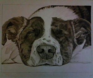 black, dog, and drawing image