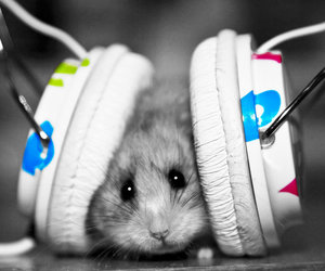 music, hamster, and animal image