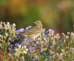 bird and sparrow image