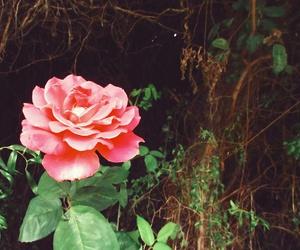 dark, flor, and flower image