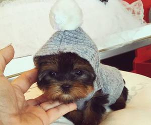 awh, little, and dog image