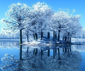 tree, winter, and blue image