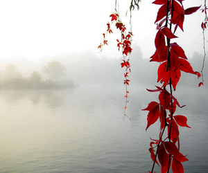 red, leaves, and photography image