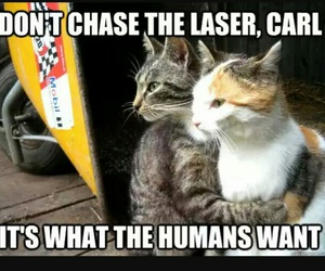 cat, funny, and laser image