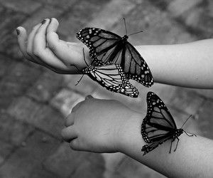 :), beautiful, and butterfly image