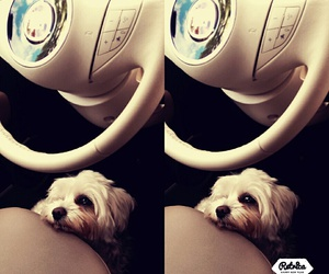 cabrio, cute, and dogs image