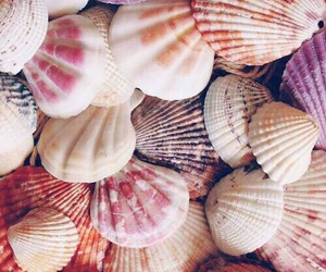 shell, beach, and pink image