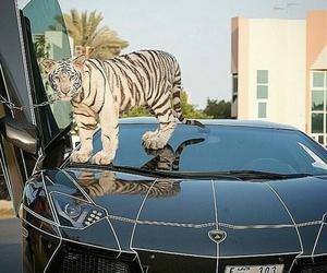 car and emirates image