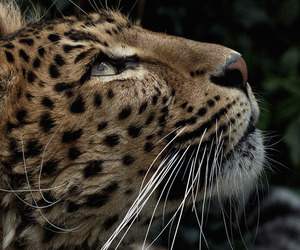 animal and beautiful image