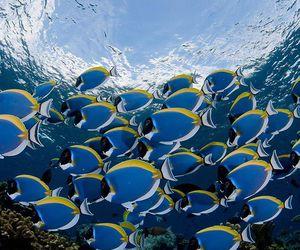 beautiful, fish, and magical image