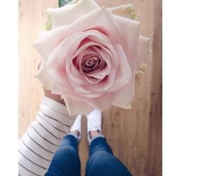 flower, pink rose, and rose image