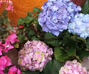 azul, flor, and rosa image