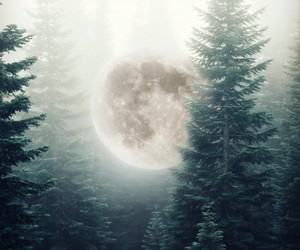 aesthetic, forest, and outdoors image