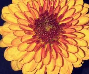 background, facebook, and flower image