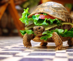 sandwiches and turtles image