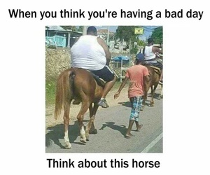 bad day, horse, and lol image