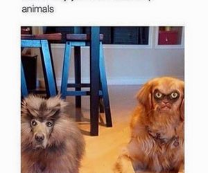 funny, dog, and animals image