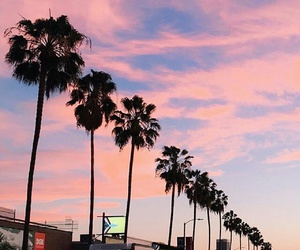 palms, pink, and sky image