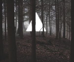 forest, triangle, and tree image