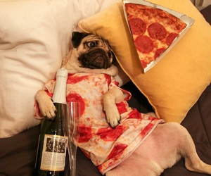 dog, pizza, and pug image