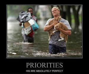cats and priorities image